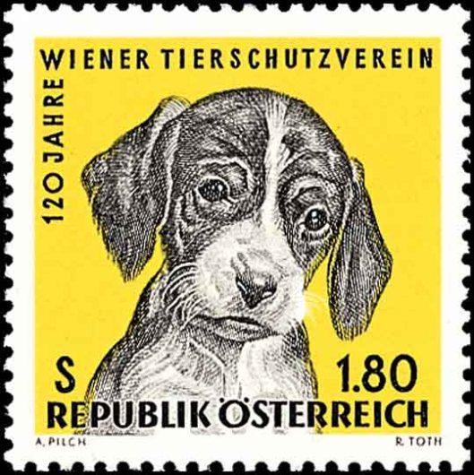 hund-austria-1966-a